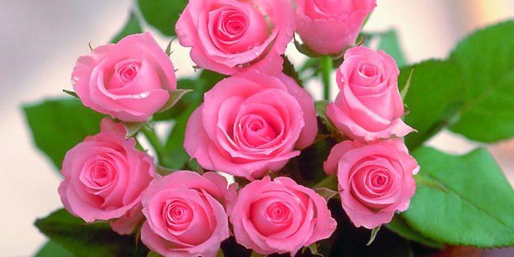 Những loại hoa sinh nhật đẹp và vô cùng ý nghĩa dành tặng người thân yêu