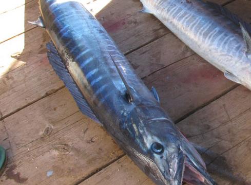 Cách làm cá thu một nắng cực thơm ngon